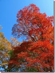 21最高の天気と紅葉