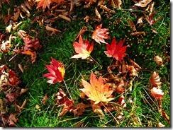 16沢山の落ち葉が綺麗
