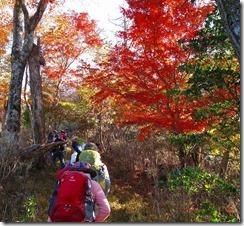 08紅葉の中の登山道