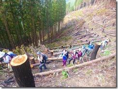 05伐採地を登りますが1年前の山火事の痕跡があります