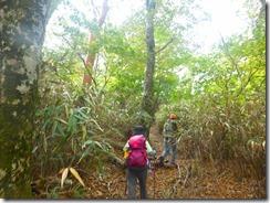 38ブナの林もあります