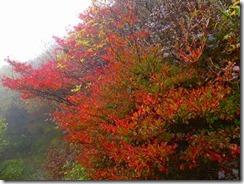 28素晴らしい紅葉