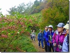 07登山道脇にマユミ