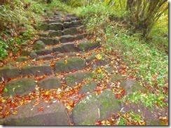 09登山道には紅葉の落ち葉