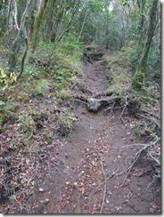 27登山道は掘割状態、雨の時は危険ですね