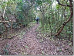 19自然林の縦走路が大箆柄岳まで続きます