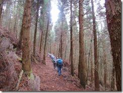 07南方向に植林帯を平行に歩きます