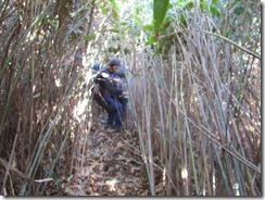 30強烈な笹竹を下り抜けます、このコースを登りに使うとモグラ状態で大変です