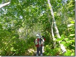 03最初は樹林帯の中を歩きます