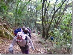 07自然林の中を登っていきます
