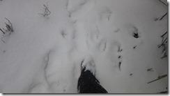 10 20cmほどの積雪