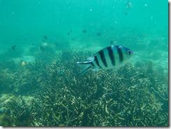 21水中撮影、魚が一杯近寄ってきます