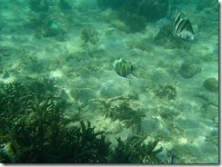 20水中撮影、魚が一杯近寄ってきます
