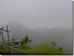17あいにくの雨でチョコレートヒル散策は中止、姿も見えません