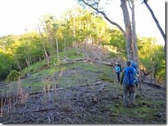 2-02笠松山への風倒木の縦走路