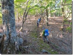 2-08本谷山を目指します。ブナ林の縦走路