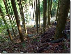 24下部林道に下りてきましたP1070983