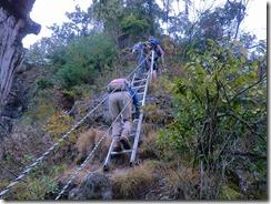 18登り上がるとすぐに下りの梯子現れるが