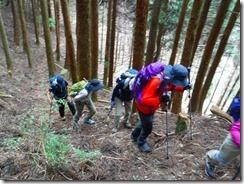 03植林帯を登ります