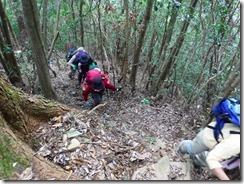 03植林帯から自然林の上りです