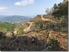 09白坂峠直前の伐採地