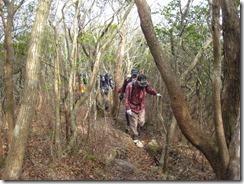 03紅葉樹林帯を登る