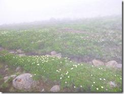 3-00絶景の花畑でした。