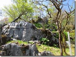 15烏帽子岳手前の石灰岩