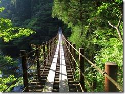 23夕食まで時間があったので樅木吊橋の見学をしました