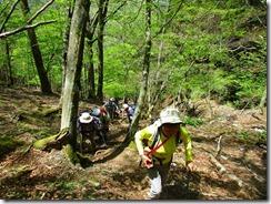 03 新緑の登山道