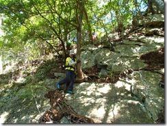 2-15木根が岩を割いて自然の生き様を感じます