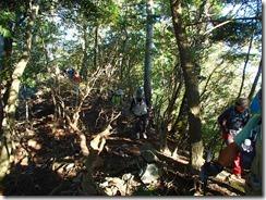 2-03自然林の上りです。ヒメシャラが多くあります