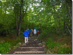 02最初は樹林帯を歩きます