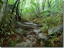 05登山道は急登で岩盤模様