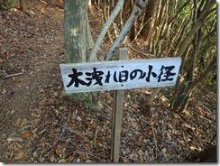 41木漏れ日の小径