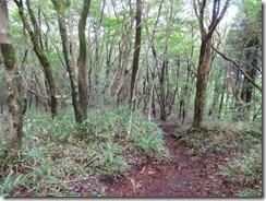 07自然林になる