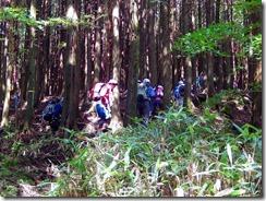 06植林地の中
