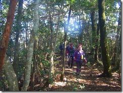 2-25気持ち良い自然林の稜線歩きです