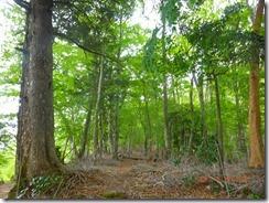 13ブナなど自然林の中を歩きます