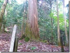 24小松神社大杉まで下りてきました