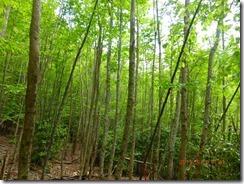08自然林がきれいです。