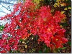 08真っ赤な紅葉