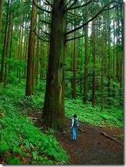 1-03一本杉