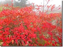 27紅葉がきれいですが何せ太陽光が無いので映えません