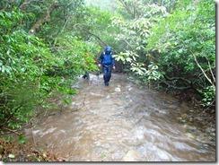 2-05登山道は水があふれています、ここは濡れてもやむなし