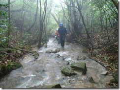 2-07登山道は水があふれています、ここは濡れてもやむなし