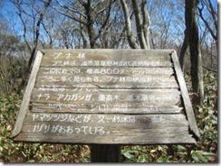 14 ブナ林の看板