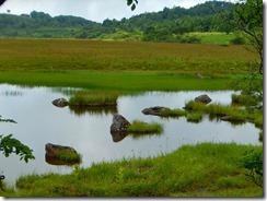 11鎌ヶ池