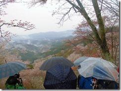 08 花矢倉の撮影スポットには早朝の雨の中でもたくさんの人
