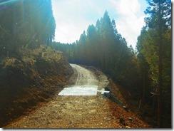 11登山道を林道が横切っています